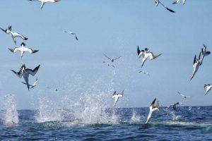 Port Elizabeth Marine Tour - Diving Gannet