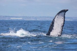 Port Elizabeth Marine Tour in Algoa Bay
